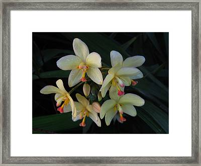 Aloha Framed Print by Ange Sylvestri