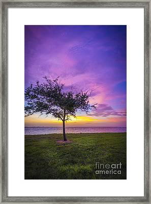 Alone At Sunset Framed Print by Marvin Spates