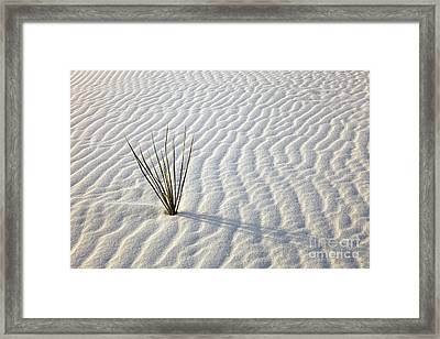 Alone In A Sea Of White Framed Print by Mike  Dawson