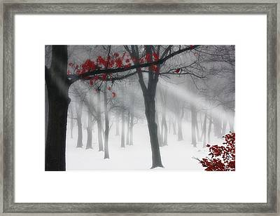 Alone In The Forest Framed Print by Tom York Images