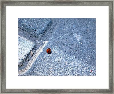 Alone In The Zone Framed Print by Nathalie Hope