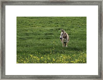 Alone Framed Print by Kimberly Danner