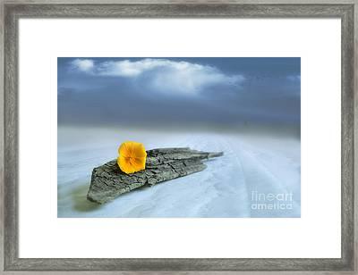 Alone On The Beach Framed Print by Veikko Suikkanen