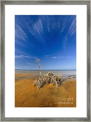 Alone On The Outer Banks Framed Print by Dan Carmichael