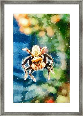 Along Came A Spider Framed Print by Steve Taylor