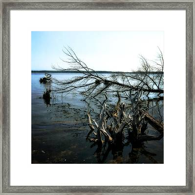 Along The Lost Lake Trail Framed Print by Michelle Calkins