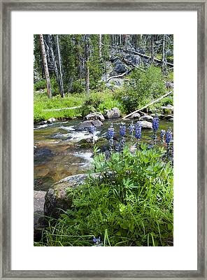 Along The River Framed Print by Fran Riley