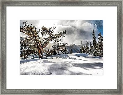 Along The Way Framed Print by Steven Reed