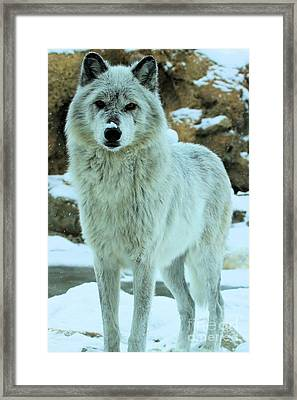 Alpha Girl Framed Print by Adam Jewell