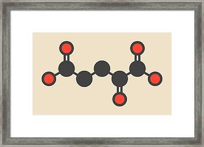 Alpha-ketoglutaric Acid Molecule Framed Print by Molekuul