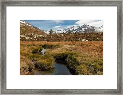 Alpine Biotope Framed Print by Lorenzo Tonello
