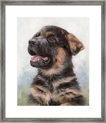 Alsatian Puppy Painting Framed Print by Rachel Stribbling