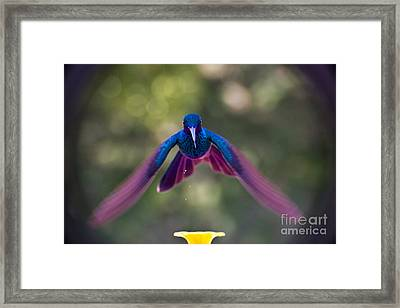 Always Leave Something On The Plate Framed Print by Al Bourassa