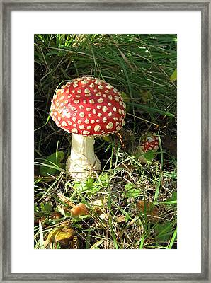 Amanita Muscaria Framed Print by Brian Chase