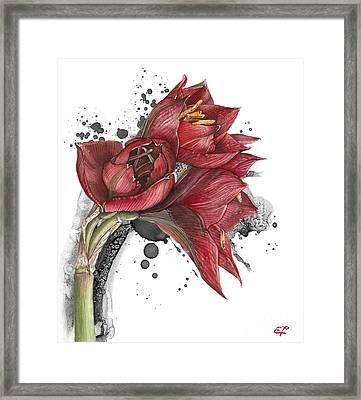Amaryllis Flowers - 2. -  Elena Yakubovich Framed Print by Elena Yakubovich