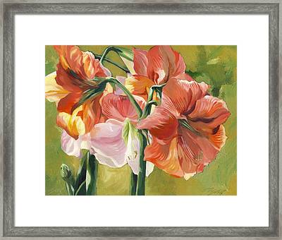 Amaryllis In Spring Framed Print by Alfred Ng