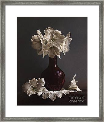 Amaryllis  Framed Print by Larry Preston