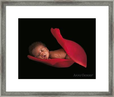 Amaya In Rose Framed Print by Anne Geddes