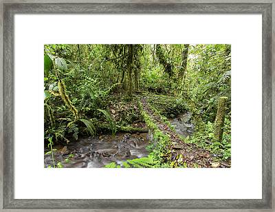 Amazonian Cloud Forest Framed Print by Dr Morley Read