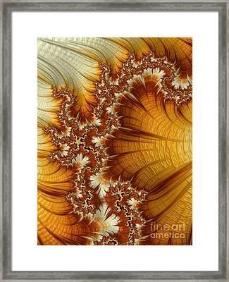 Amber  Framed Print by Heidi Smith