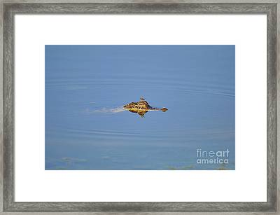 Amberwing Atop Alligator Framed Print by Al Powell Photography USA