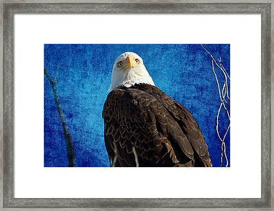 American Bald Eagle Blues Framed Print by James BO  Insogna