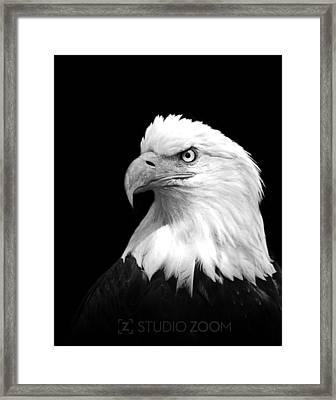 American Bald Eagle Framed Print by Julie Keller