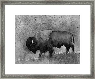 Monochrome American Buffalo 3  Framed Print by Hailey E Herrera