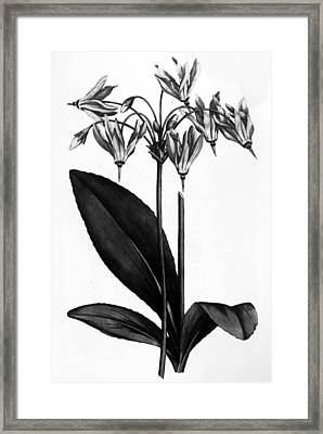 American Cowslip, 1787 Framed Print by Granger