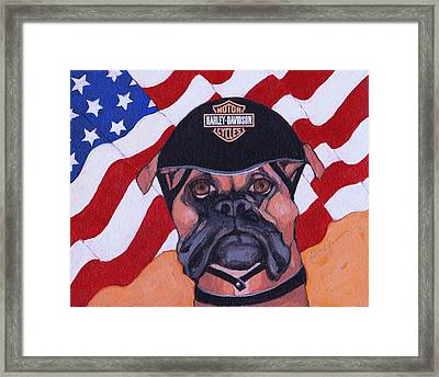 American Dawg Framed Print by Christina Hoffman