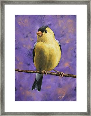 American Goldfinch Framed Print by Crista Forest