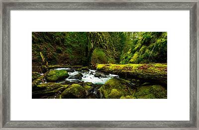 American Jungle Framed Print by Chad Dutson