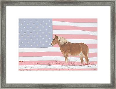 American Palomino Framed Print by James BO  Insogna