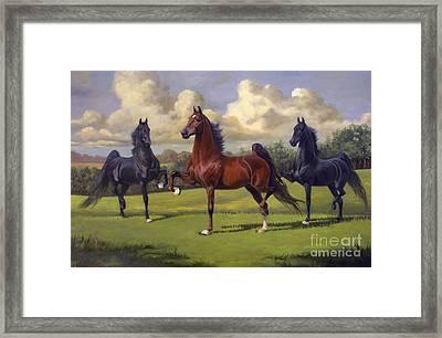 American Saddlebred Stallions Framed Print by Jeanne Newton Schoborg