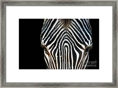 Aminal Print Framed Print by Dan Holm