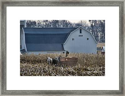 Amish Corn Picking And 1919 Barn Framed Print by David Arment