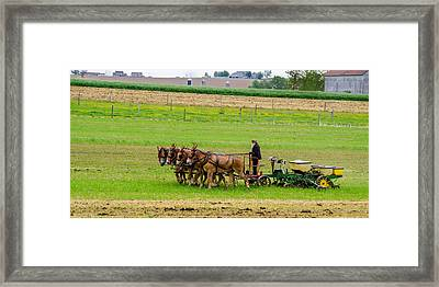 Amish Farmer Framed Print by Guy Whiteley