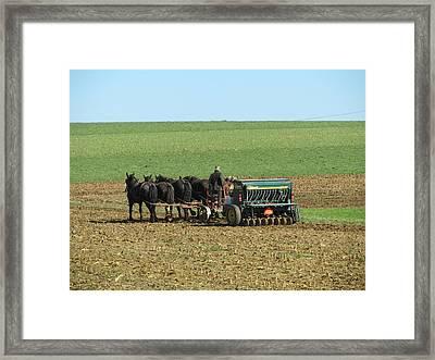 Amish Farmer In Field Framed Print by Sara Knob