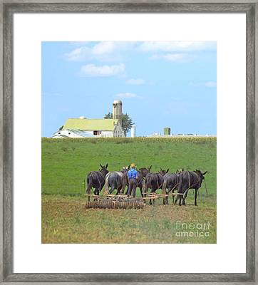 Amish Farmer Working The Land Framed Print by Diane Diederich
