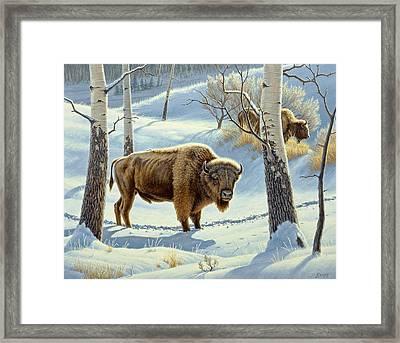 Among The Aspens- Buffalo Framed Print by Paul Krapf