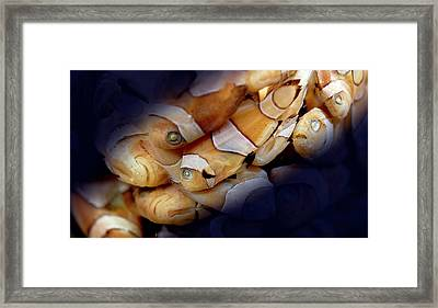Amphiprion Sp. Framed Print by Natural History Museum, London