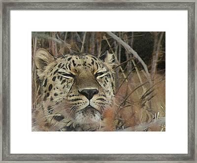 Amur Leopard 1 Framed Print by Ernie Echols