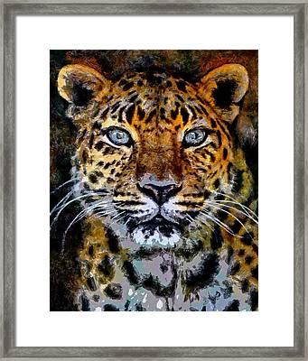 Amur Leopard Stare Framed Print by Ernie Echols