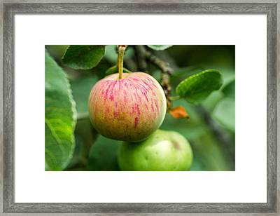 An Apple - Featured 3 Framed Print by Alexander Senin