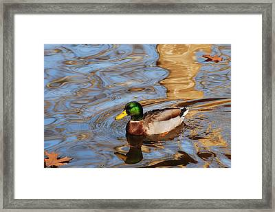 An Autumn Swim Framed Print by Frozen in Time Fine Art Photography