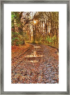 An Autumn Track Framed Print by Dave Woodbridge
