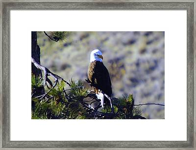An Eagle In The Sun Framed Print by Jeff Swan