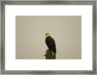 An Eagle Perched Framed Print by Jeff Swan