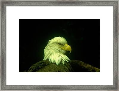An Eagle Portrait Framed Print by Jeff Swan