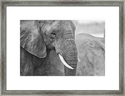 An Elephant Never Forgets Framed Print by Paul W Sharpe Aka Wizard of Wonders